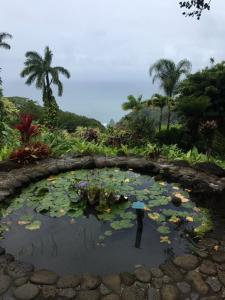 32-MAUI HAWAII